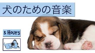 Download 犬の音楽は非常に活発子犬を落ち着かせるために! Video