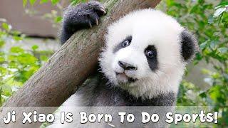 Download Ji Xiao Is Born To Do Sports!   iPanda Video