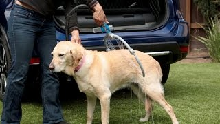 Download Nissan Rogue Dogue - With a Built-in Dog Shower! Video
