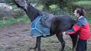 Download Gay, A Very Itchy Horse Video