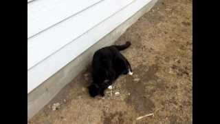 Download Male and Female cats meeting for the first time. Video