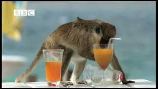 Download Drunk Monkeys Fail - Weird Nature Video