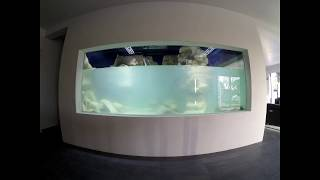 Download Aquarium 13 000L (construction) Video