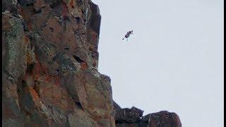 Download Un poussin saute d'une falaise volontairement ! - ZAPPING SAUVAGE Video