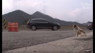 Download Dog Left To Die In The Middle Of An Expressway | Animal in Crisis EP26 Video