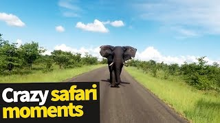 Download Top 20 Incredible Safari Moments Caught on Camera Video