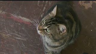 Download Cats left behind after owner passes away now up for adoption Video