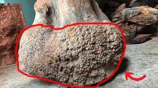 Download Tại sao gỗ nu lại đắt gấp nhiều lần gỗ sưa, dù nó chỉ là phần ″dị tật xấu xí″? Video