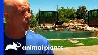 Download Brett's Backyard Tank Is Fit For The Big Screen! | Tanked Video