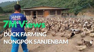 Download Duck Farming Nongpok Sanjembam Video