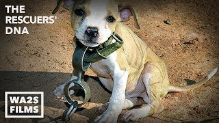 Download Hope For Dogs Like The DoDo - Dog with Heavy Chain Around Neck is Rescued by Animal Cops Detroit Video