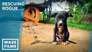 Download Dog Starving & Chained to Abandoned Home Rescued by Detroit Pit Crew: EP 13 Rescuing Rogue Video
