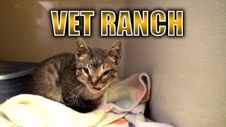 Download Severely Injured Kitten Gets a Second Chance Video