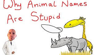 Download Why Animal Names Are Stupid Video