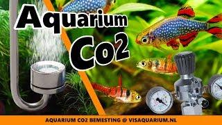 Download Aquarium Co2 bemesting voor planten, is dit nodig Video