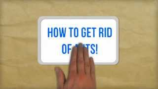 Download How to Get Rid of Ants Naturally | Best Tips for Getting Rid of Ants in Your Kitchen Video
