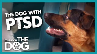 Download Can Dog's Tragic Past be Behind his Extreme Anxiety? | It's Me or the Dog Video