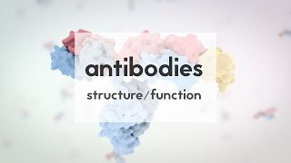 Download Therapeutic antibodies (Part 1): structure & function Video