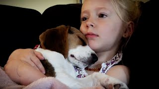 Download Cute Puppy Loves to Fall Asleep on Little Girl Video