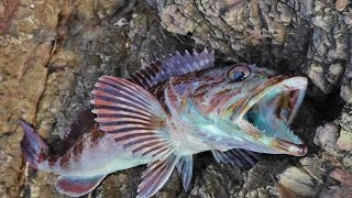 Download My Favorite Fish to Catch Video