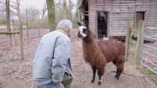 Download How to Say Hello to a Llama Video