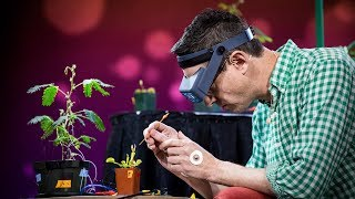 Download Electrical experiments with plants that count and communicate | Greg Gage Video