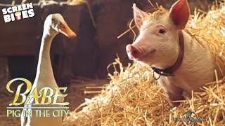 Download Babe Pig In The City - Official Trailer (HD) Magda Szubanski, Elizabeth Daily, Mickey Rooney Video