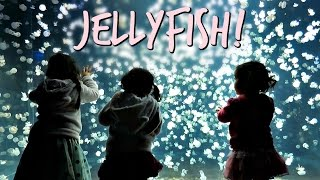 Download THOUSANDS OF JELLYFISH! - April 23, 2017 - ItsJudysLife Vlogs Video