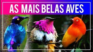 Download As aves MAIS BONITAS do mundo! (Aves do Paraíso, plumagens coloridas e outros) Video