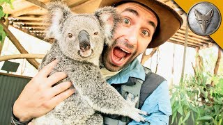 Download Koala Gives Stinky Hugs! Video