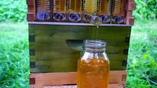 Download Honey Explosion! Flow Hive in 11 Weeks Video