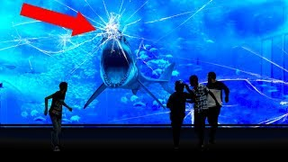 Download Why NO Aquarium In The WORLD Has a Great White Shark! Video
