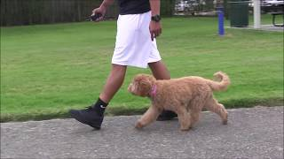 Download How to TRAIN your own dog! Video