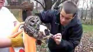 Download grateful owl Video
