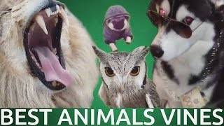 Download Best Animals Vines of January 2016 | FAILZONE | Part 1 Video