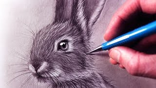 Download How to Draw a Rabbit Video