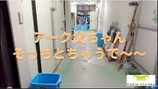 Download アーク父ちゃんそっちとちゃうで〜〜 Video