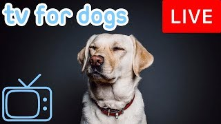 Download Dog TV - Relax Your Dog Music - Helping 8 Million Dogs Every Month Video