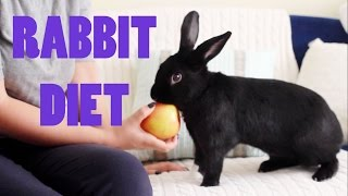 Download What Can Rabbits Eat?   Lennon's Diet Video