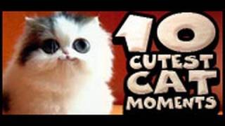 Download 10 Cutest Cat Moments Video
