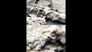 Download NEW MARS IMAGES 7-14-18 Video