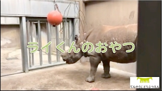 Download 【天王寺動物園】ライくんのおやつ Video