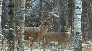 Download Saskatchewan Deer Hunt with 2015 Jim Benton Chambered for the Wild Video