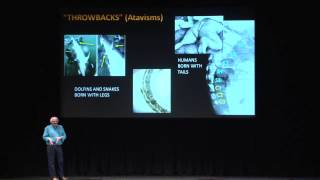 Download Dr. Jack Horner-Using the Tools of Evolution to Recreate Dinosaurs Video
