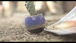 Download Levitating Cactus!!!! Video