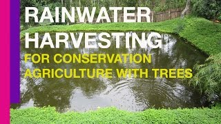 Download Rainwater Harvesting for Conservation Agriculture with Trees Video