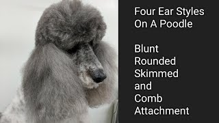 Download Four Ear Styles on a Poodle Video