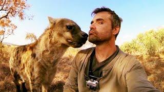 Download Cet homme est le meilleur ami d'une hyène (Kevin Richardson) - ZAPPING SAUVAGE Video