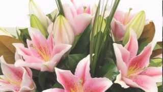 Download Cắm hoa với hoa ly, Hoa ly tet 2014, hoa ly đà lạt - LH: 01227678848 Video