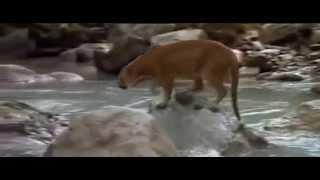 Download LESIKA WA HA DIPHOLO {O KAE MODIMO WA HAO} Video